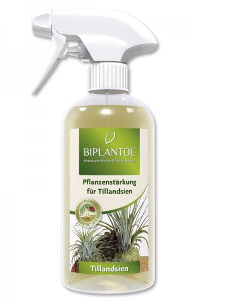 Biplantol-Tillandsien_139